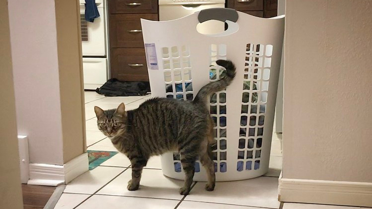 A cat rubbing up against a laundry basket.